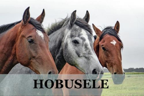 hobusele